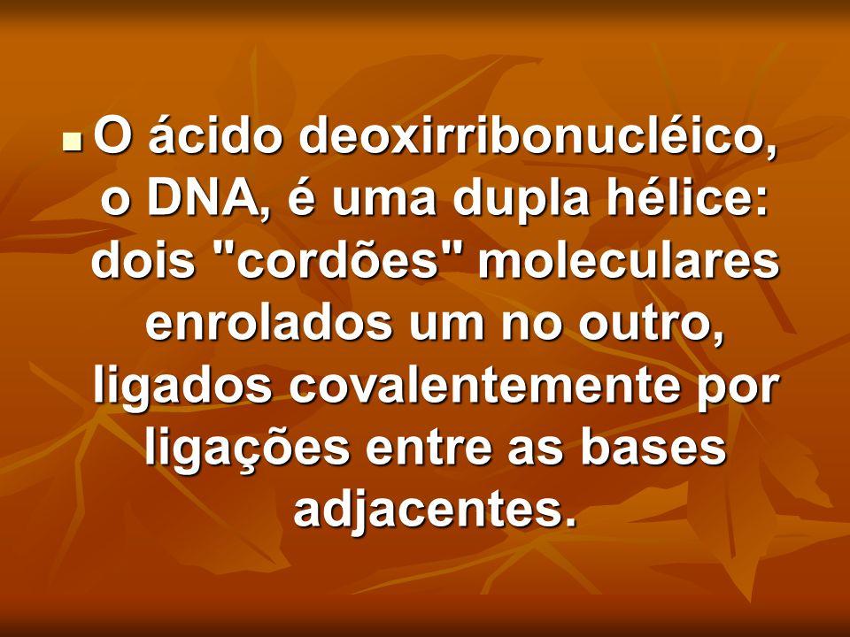O ácido deoxirribonucléico, o DNA, é uma dupla hélice: dois
