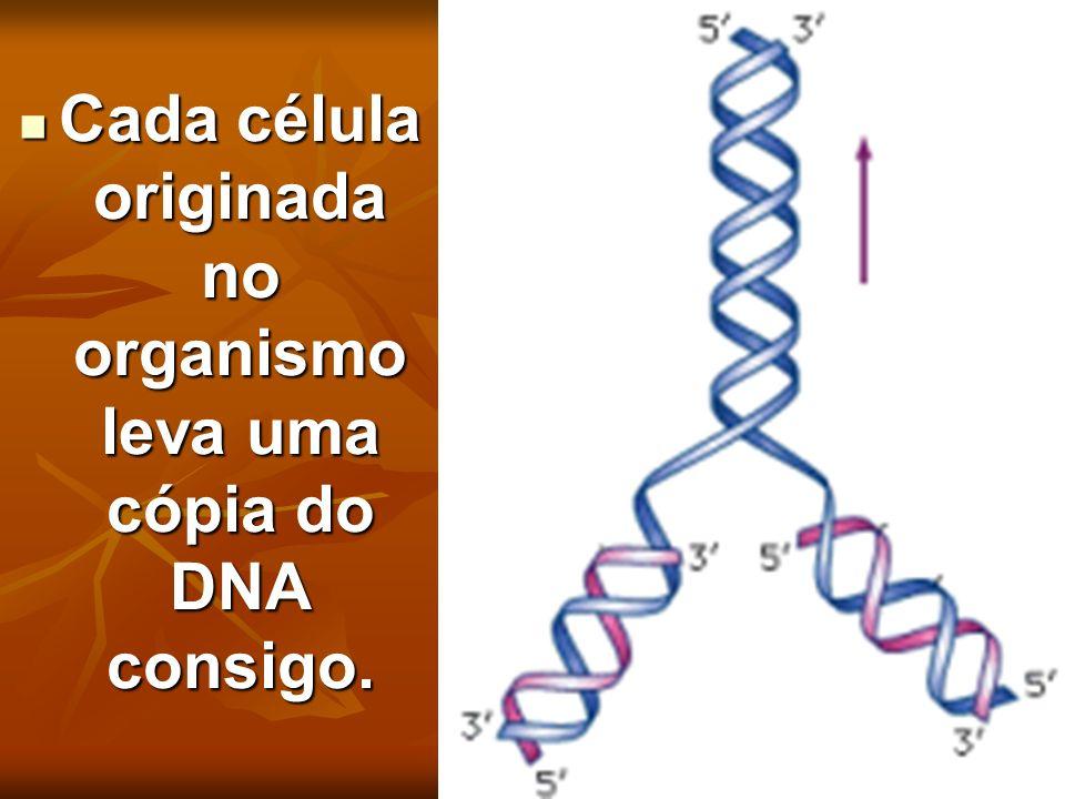 Cada célula originada no organismo leva uma cópia do DNA consigo. Cada célula originada no organismo leva uma cópia do DNA consigo.