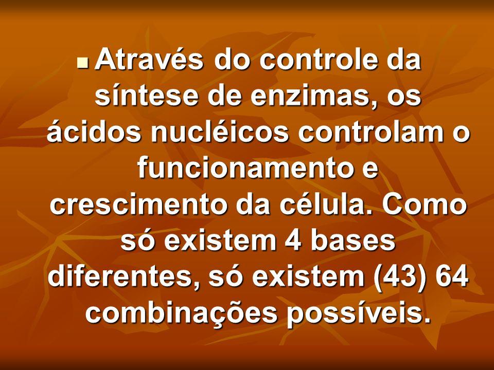 Através do controle da síntese de enzimas, os ácidos nucléicos controlam o funcionamento e crescimento da célula. Como só existem 4 bases diferentes,