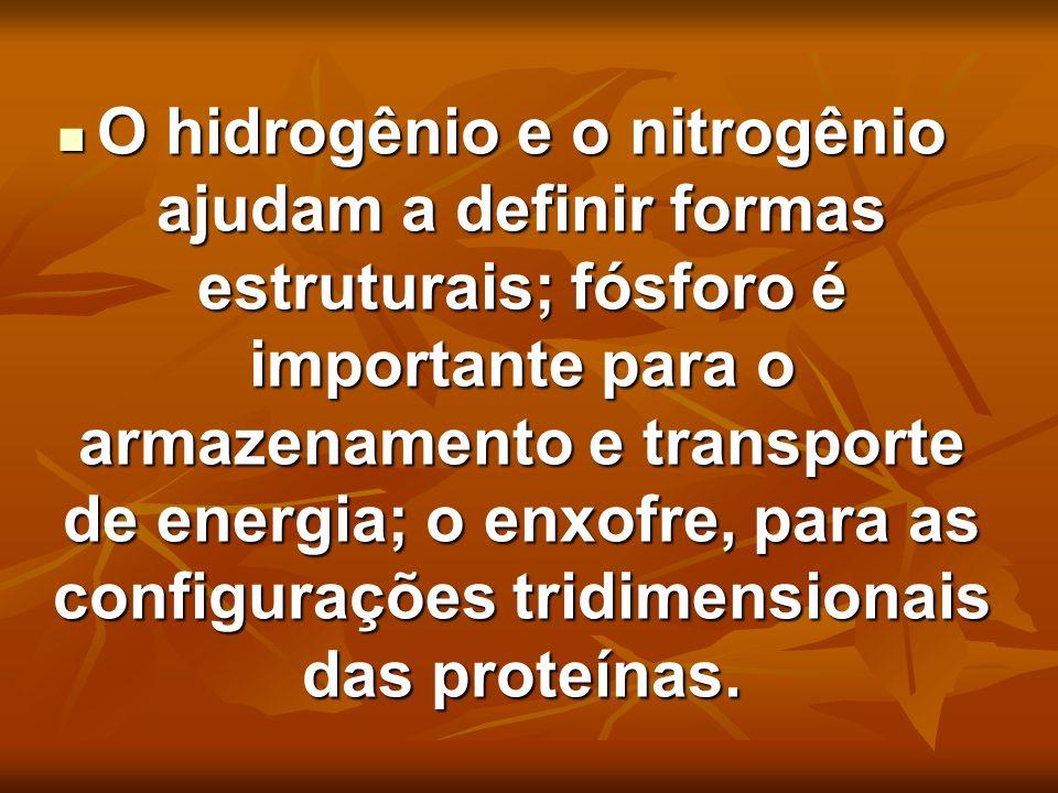 O hidrogênio e o nitrogênio ajudam a definir formas estruturais; fósforo é importante para o armazenamento e transporte de energia; o enxofre, para as