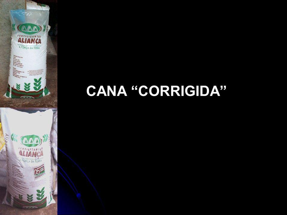 CANA CORRIGIDA