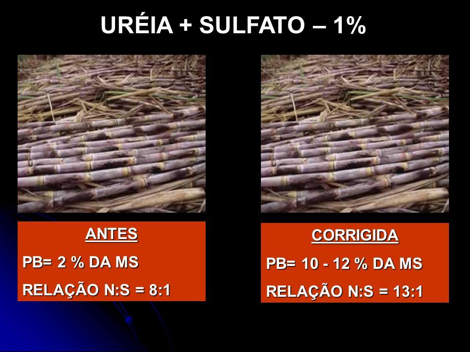 URÉIA + SULFATO – 1% ANTES PB= 2 % DA MS RELAÇÃO N:S = 8:1 CORRIGIDA PB= 10 - 12 % DA MS RELAÇÃO N:S = 13:1