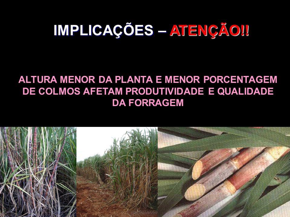 IMPLICAÇÕES – ATENÇÃO!! ALTURA MENOR DA PLANTA E MENOR PORCENTAGEM DE COLMOS AFETAM PRODUTIVIDADE E QUALIDADE DA FORRAGEM