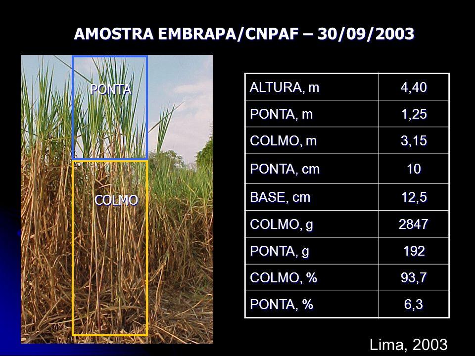 PONTA COLMO ALTURA, m 4,40 PONTA, m 1,25 COLMO, m 3,15 PONTA, cm 10 BASE, cm 12,5 COLMO, g 2847 PONTA, g 192 COLMO, % 93,7 PONTA, % 6,3 AMOSTRA EMBRAP
