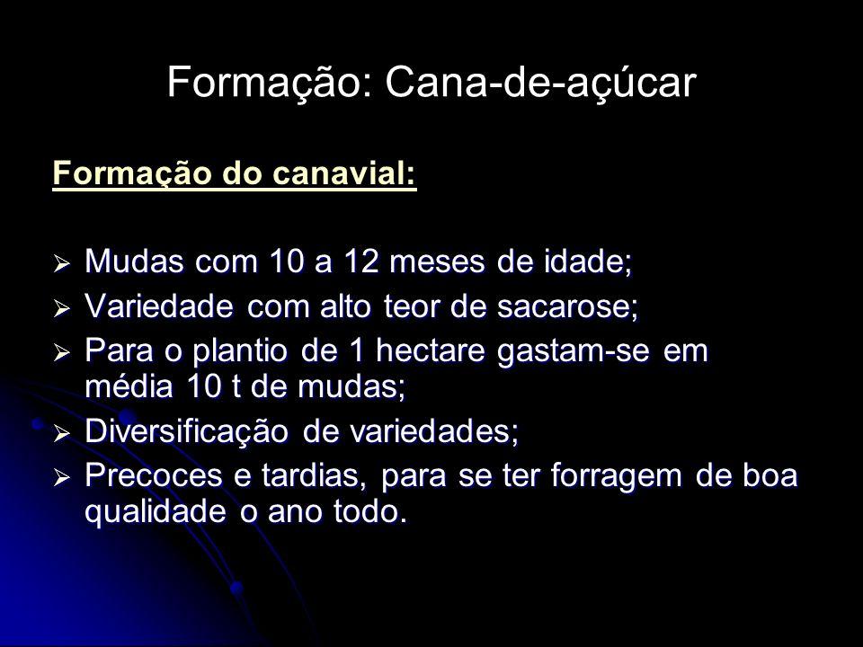 Formação: Cana-de-açúcar Formação do canavial: Mudas com 10 a 12 meses de idade; Mudas com 10 a 12 meses de idade; Variedade com alto teor de sacarose