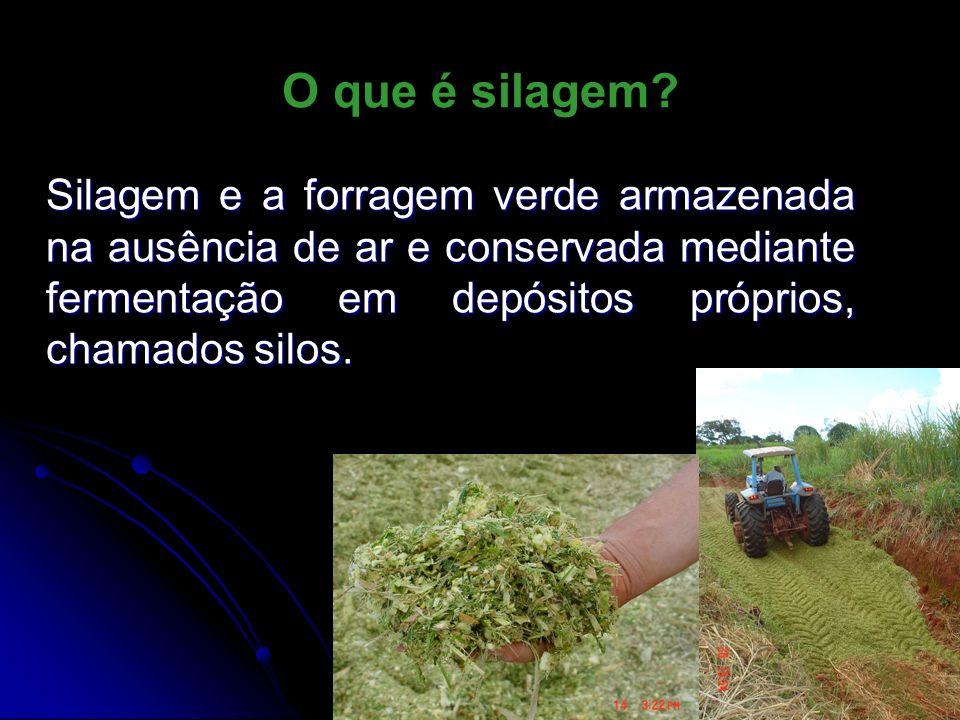 O que é silagem? Silagem e a forragem verde armazenada na ausência de ar e conservada mediante fermentação em depósitos próprios, chamados silos.