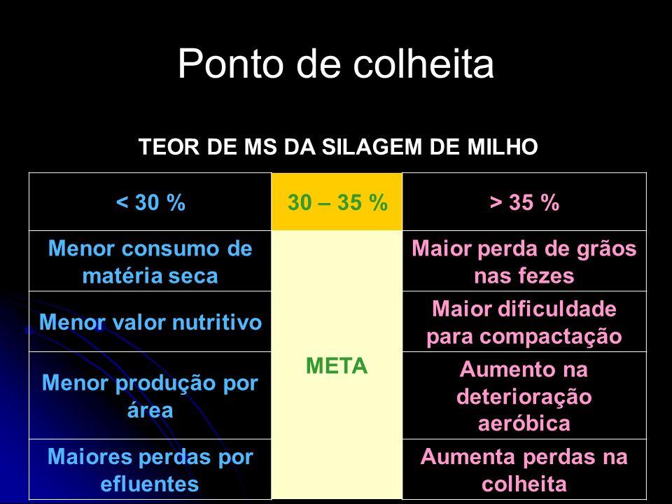 TEOR DE MS DA SILAGEM DE MILHO < 30 %30 – 35 %> 35 % Menor consumo de matéria seca META Maior perda de grãos nas fezes Menor valor nutritivo Maior dif
