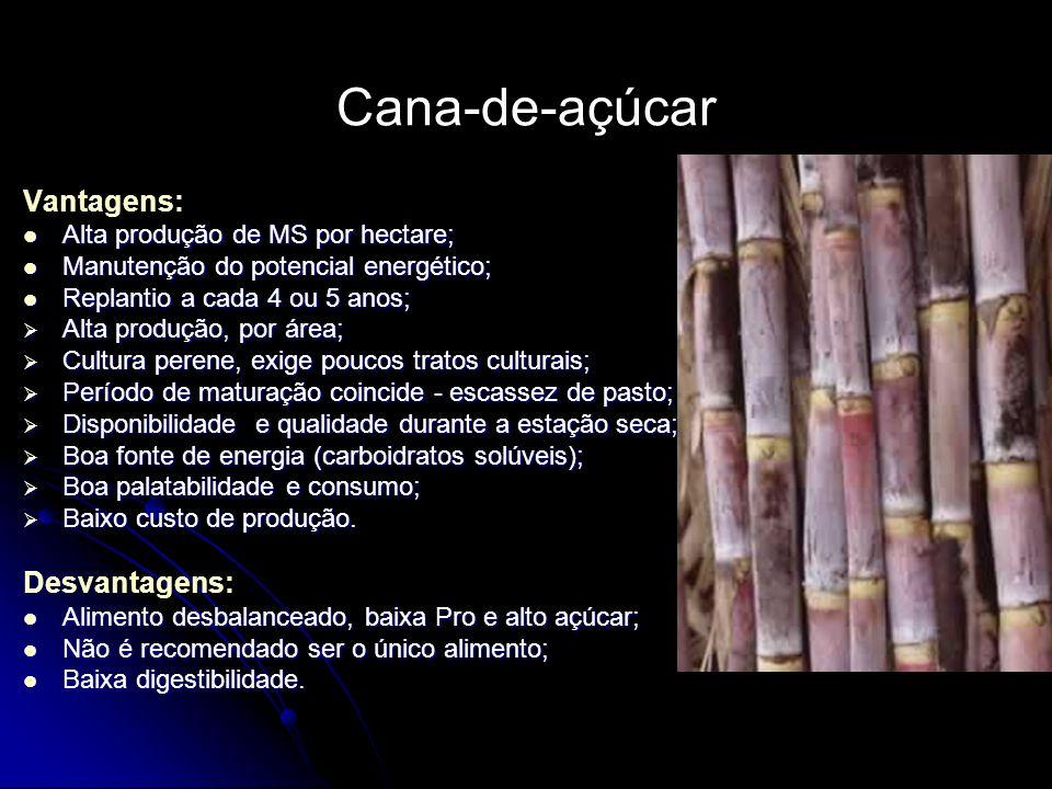 Cana-de-açúcar Vantagens: Alta produção de MS por hectare; Alta produção de MS por hectare; Manutenção do potencial energético; Manutenção do potencia
