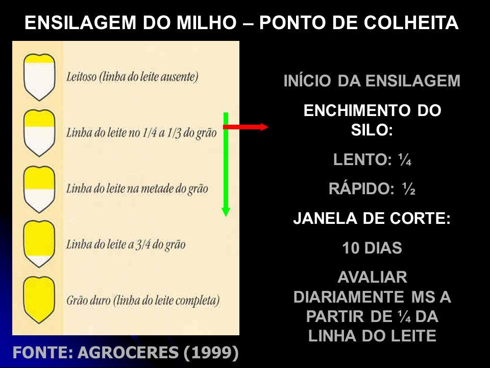 FONTE: AGROCERES (1999) ENSILAGEM DO MILHO – PONTO DE COLHEITA INÍCIO DA ENSILAGEM ENCHIMENTO DO SILO: LENTO: ¼ RÁPIDO: ½ JANELA DE CORTE: 10 DIAS AVA