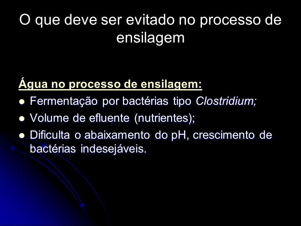 O que deve ser evitado no processo de ensilagem Água no processo de ensilagem: Fermentação por bactérias tipo Clostridium; Fermentação por bactérias t