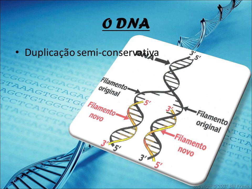 O DNA Duplicação semi-conservativa