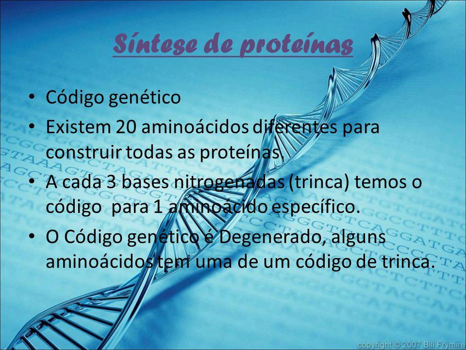 Síntese de proteínas Código genético Existem 20 aminoácidos diferentes para construir todas as proteínas. A cada 3 bases nitrogenadas (trinca) temos o
