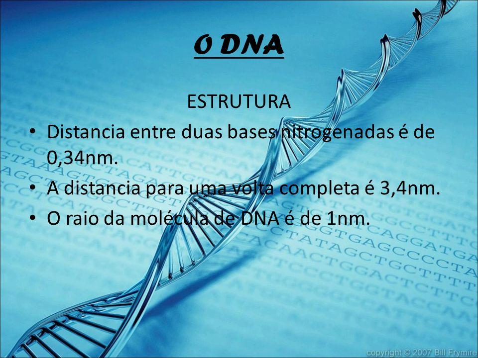 O DNA ESTRUTURA Distancia entre duas bases nitrogenadas é de 0,34nm. A distancia para uma volta completa é 3,4nm. O raio da molécula de DNA é de 1nm.