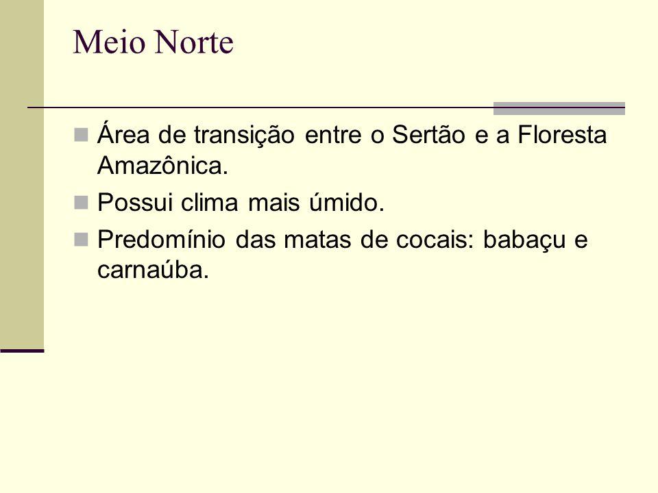 Meio Norte Área de transição entre o Sertão e a Floresta Amazônica. Possui clima mais úmido. Predomínio das matas de cocais: babaçu e carnaúba.