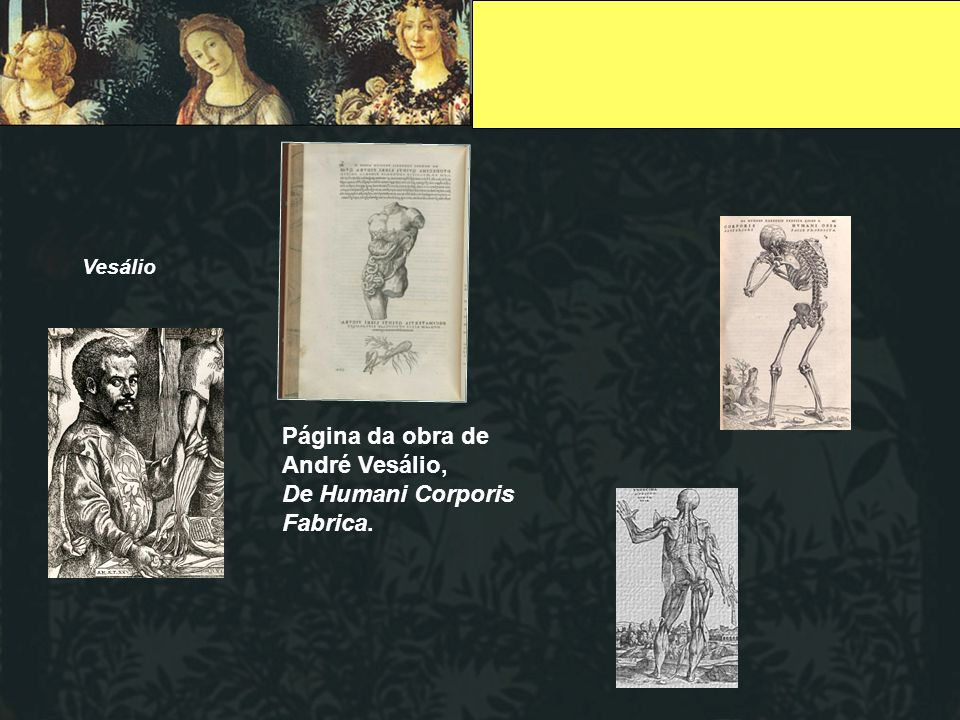 Vesálio Página da obra de André Vesálio, De Humani Corporis Fabrica.