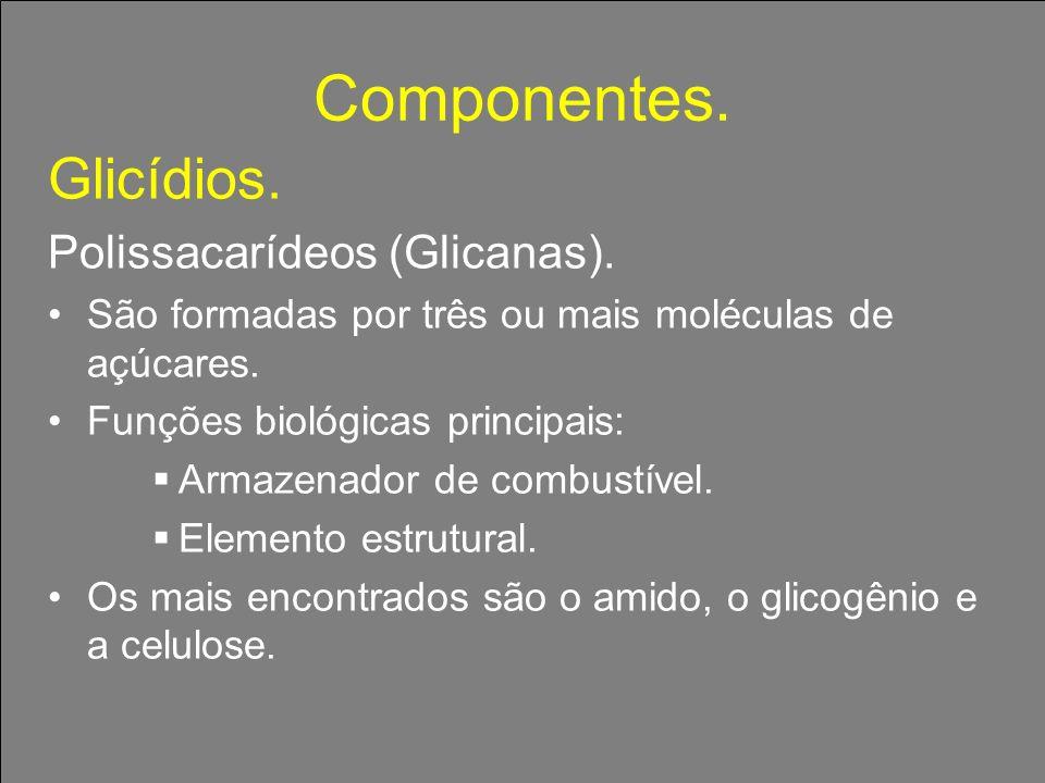 Componentes. Glicídios. Polissacarídeos (Glicanas). São formadas por três ou mais moléculas de açúcares. Funções biológicas principais: Armazenador de