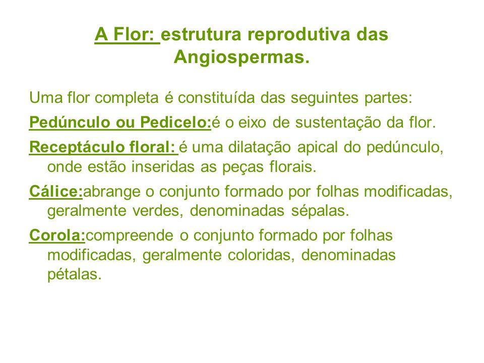 A Flor: estrutura reprodutiva das Angiospermas. Uma flor completa é constituída das seguintes partes: Pedúnculo ou Pedicelo:é o eixo de sustentação da