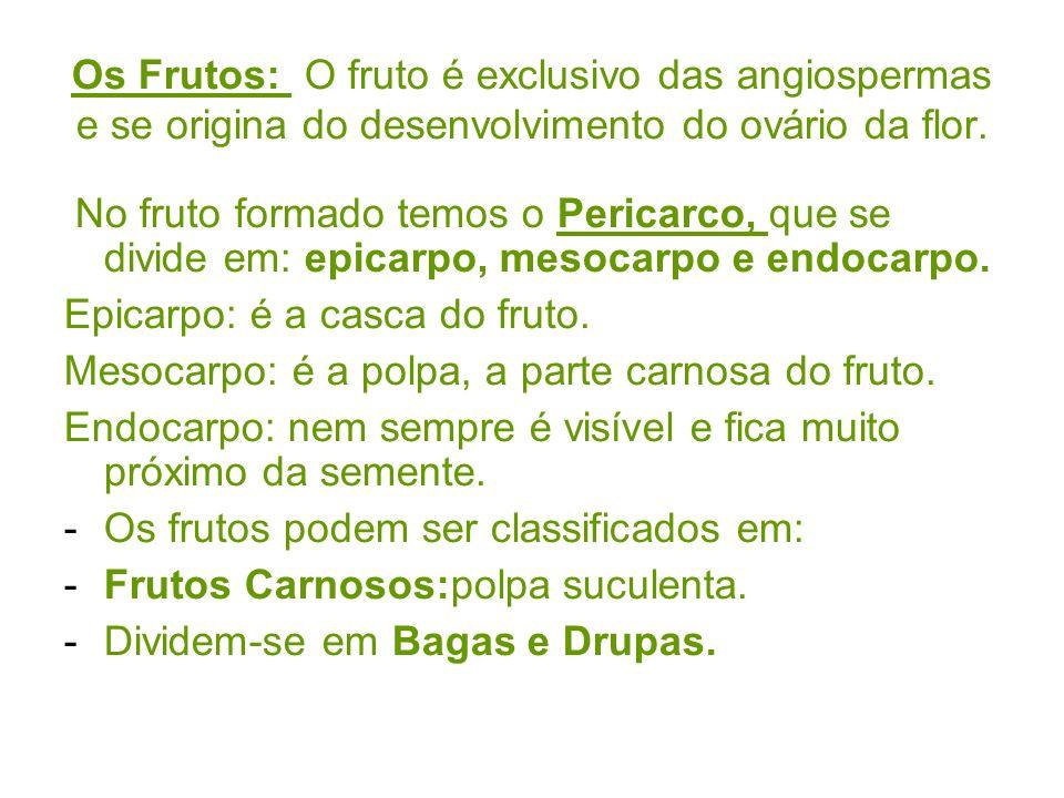 Os Frutos: O fruto é exclusivo das angiospermas e se origina do desenvolvimento do ovário da flor. No fruto formado temos o Pericarco, que se divide e