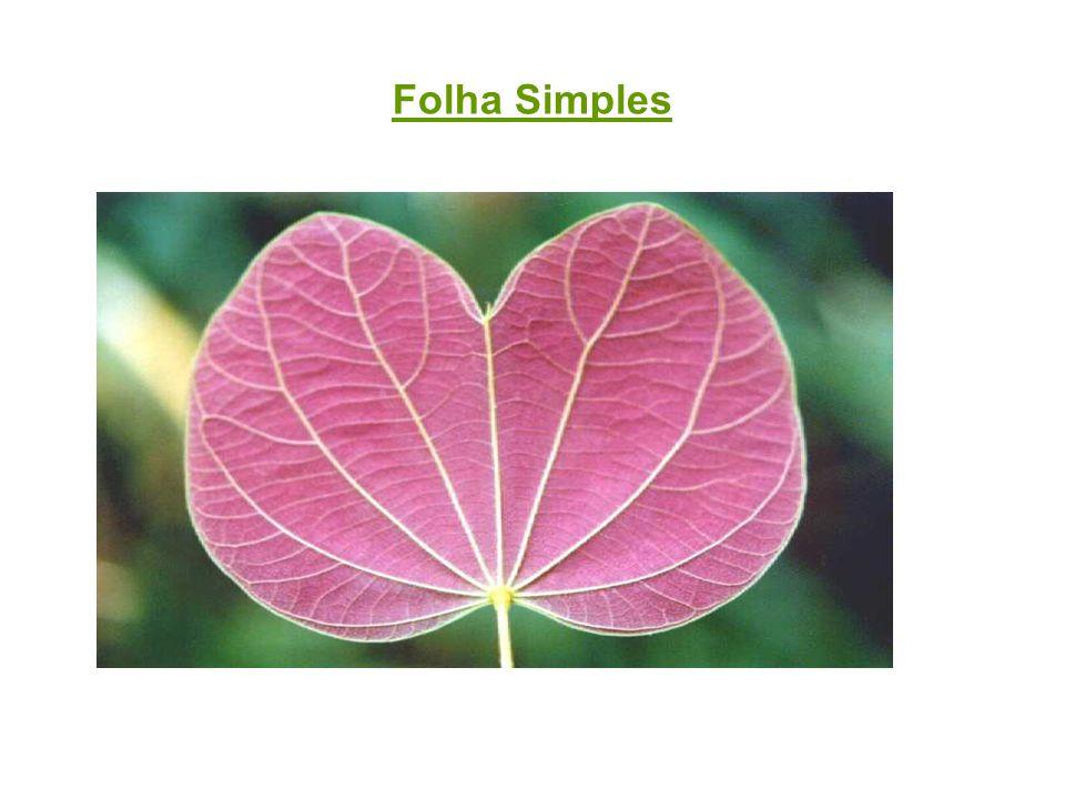 Exercícios de Revisão: 1-Sobre semente e fruto das angiospermas, responda: a)De quais partes da flor são provenientes.