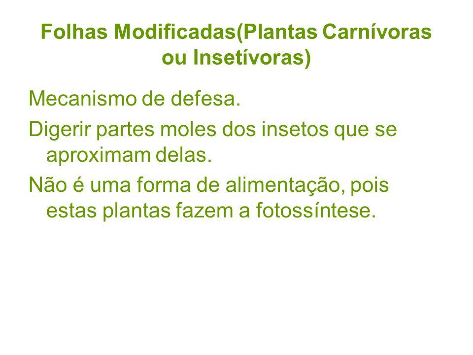Folhas Modificadas(Plantas Carnívoras ou Insetívoras) Mecanismo de defesa. Digerir partes moles dos insetos que se aproximam delas. Não é uma forma de