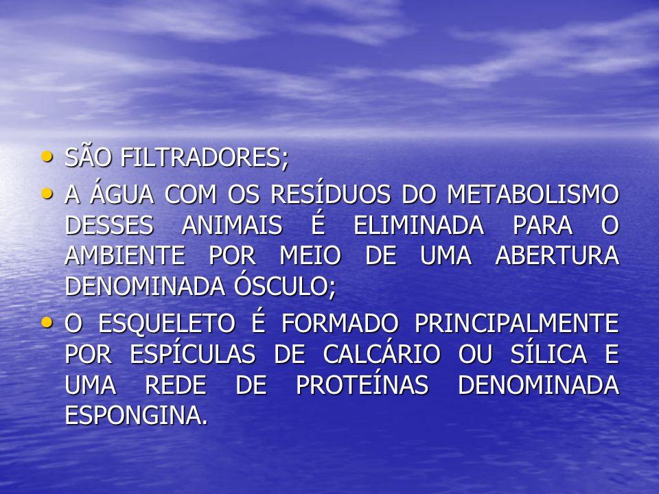 SÃO FILTRADORES; SÃO FILTRADORES; A ÁGUA COM OS RESÍDUOS DO METABOLISMO DESSES ANIMAIS É ELIMINADA PARA O AMBIENTE POR MEIO DE UMA ABERTURA DENOMINADA