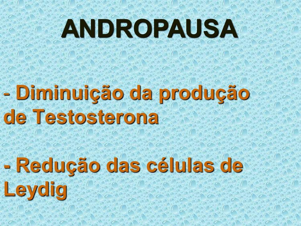 - Diminuição da produção de Testosterona - Redução das células de Leydig ANDROPAUSA