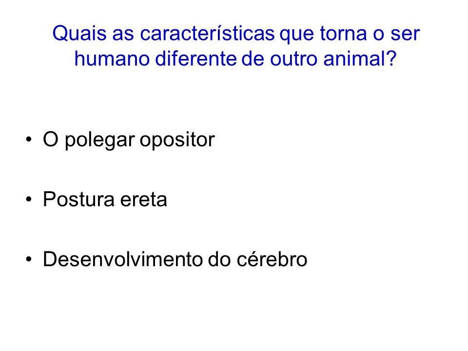 Quais as características que torna o ser humano diferente de outro animal? O polegar opositor Postura ereta Desenvolvimento do cérebro