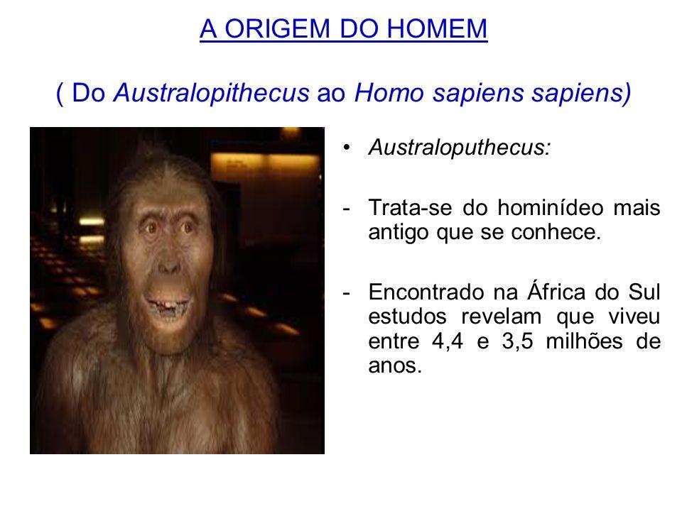 A ORIGEM DO HOMEM ( Do Australopithecus ao Homo sapiens sapiens) Australoputhecus: -Trata-se do hominídeo mais antigo que se conhece. -Encontrado na Á