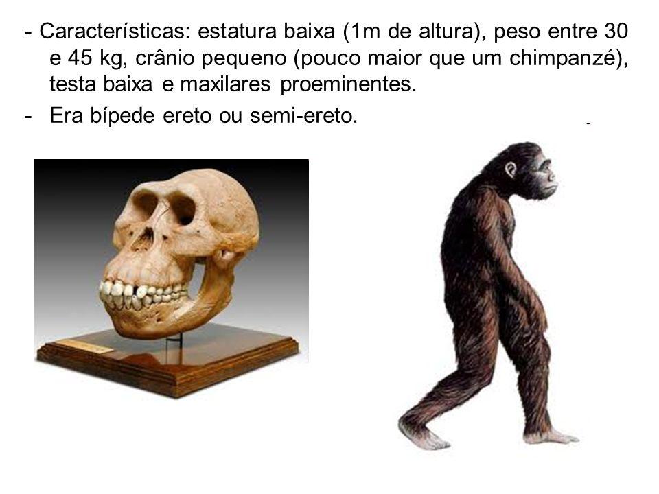 - Características: estatura baixa (1m de altura), peso entre 30 e 45 kg, crânio pequeno (pouco maior que um chimpanzé), testa baixa e maxilares proemi