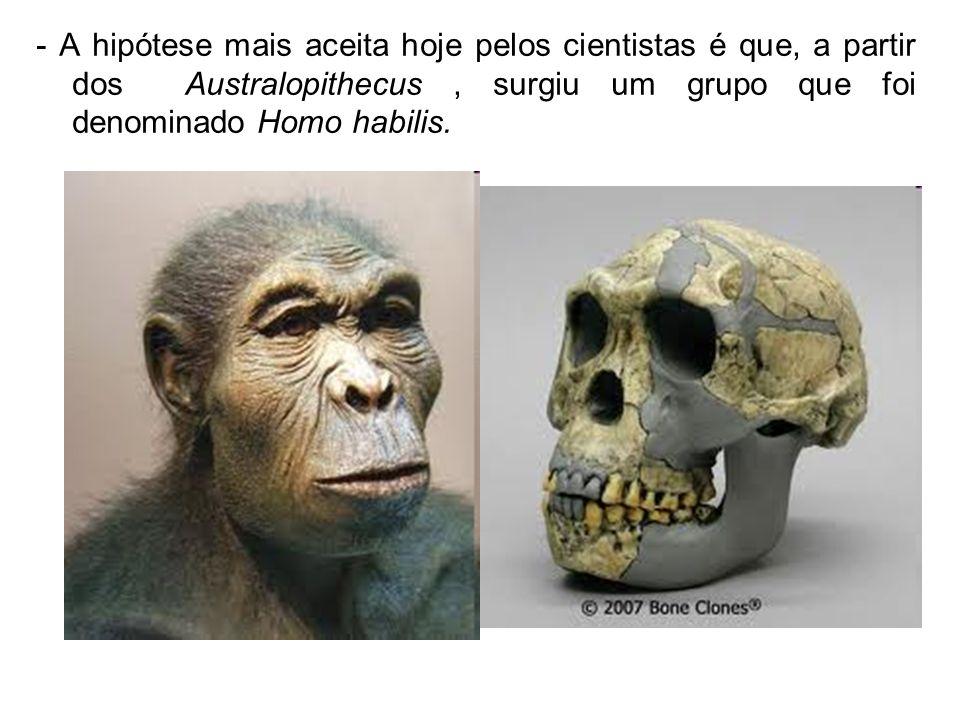 - A hipótese mais aceita hoje pelos cientistas é que, a partir dos Australopithecus, surgiu um grupo que foi denominado Homo habilis.