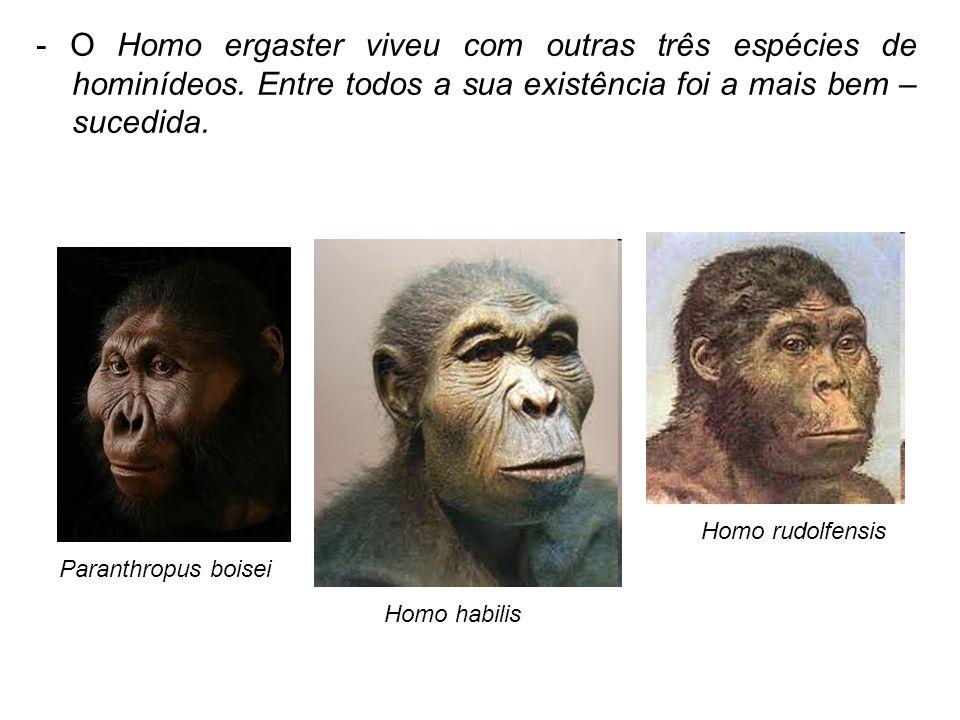 - O Homo ergaster viveu com outras três espécies de hominídeos. Entre todos a sua existência foi a mais bem – sucedida. Paranthropus boisei Homo rudol