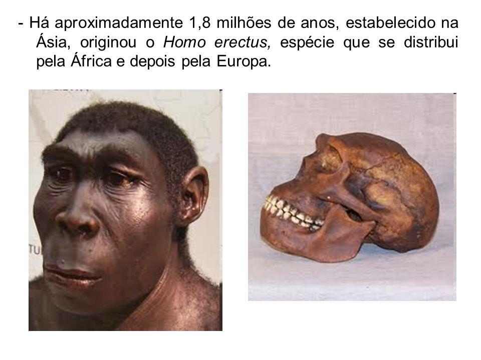 - Há aproximadamente 1,8 milhões de anos, estabelecido na Ásia, originou o Homo erectus, espécie que se distribui pela África e depois pela Europa.