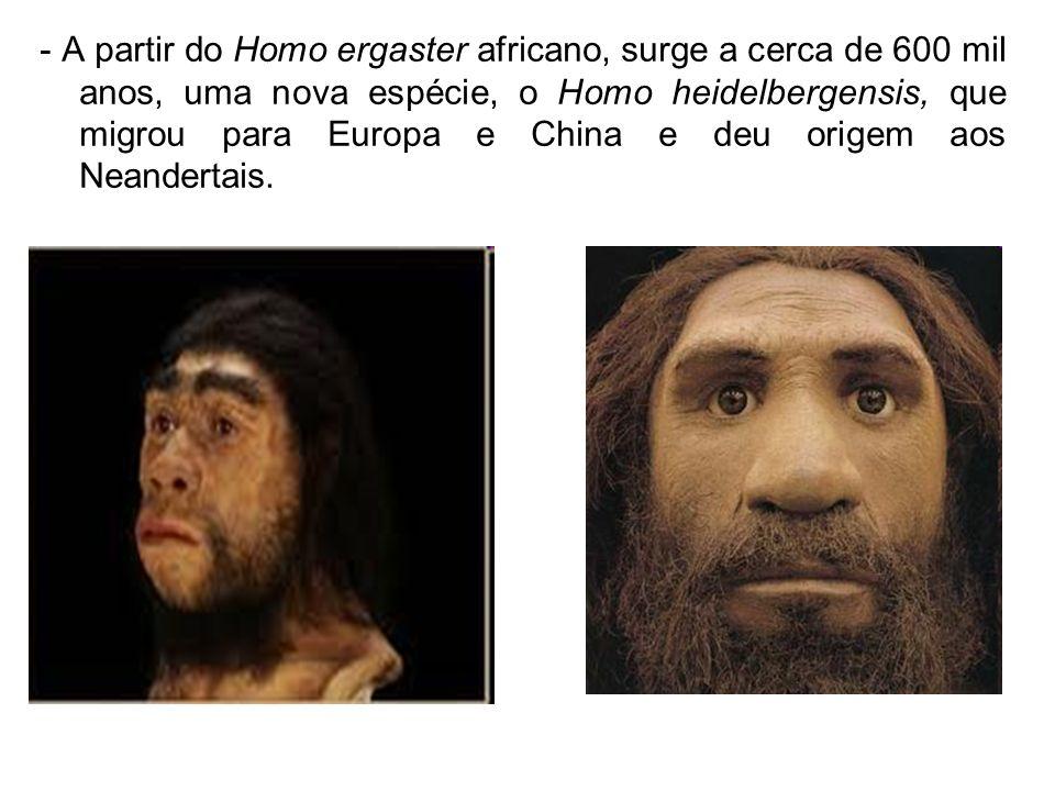 - A partir do Homo ergaster africano, surge a cerca de 600 mil anos, uma nova espécie, o Homo heidelbergensis, que migrou para Europa e China e deu or