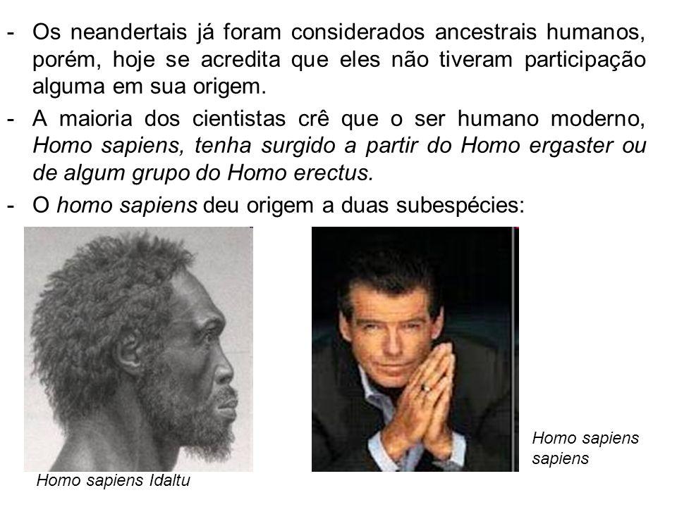 -Os neandertais já foram considerados ancestrais humanos, porém, hoje se acredita que eles não tiveram participação alguma em sua origem. -A maioria d