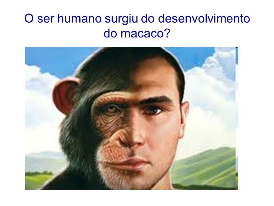 O ser humano surgiu do desenvolvimento do macaco?