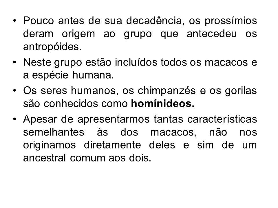 Pouco antes de sua decadência, os prossímios deram origem ao grupo que antecedeu os antropóides. Neste grupo estão incluídos todos os macacos e a espé