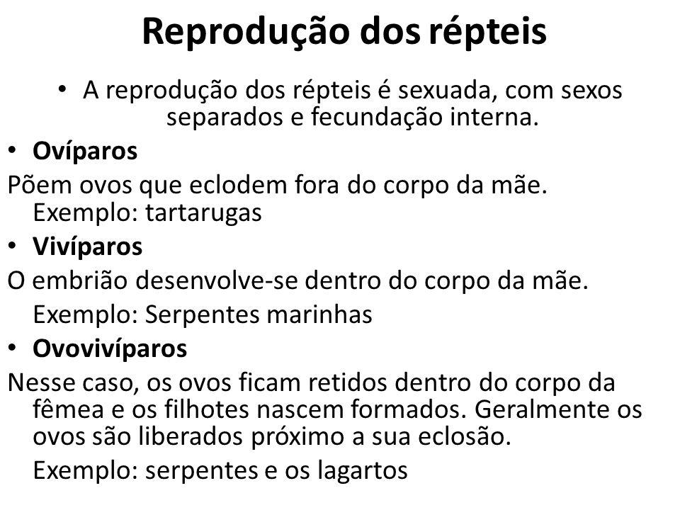 Reprodução dos répteis A reprodução dos répteis é sexuada, com sexos separados e fecundação interna. Ovíparos Põem ovos que eclodem fora do corpo da m