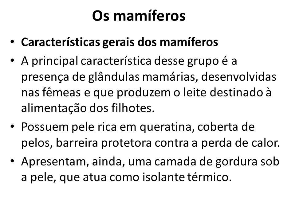 Os mamíferos Características gerais dos mamíferos A principal característica desse grupo é a presença de glândulas mamárias, desenvolvidas nas fêmeas