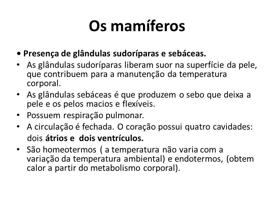Os mamíferos Presença de glândulas sudoríparas e sebáceas. As glândulas sudoríparas liberam suor na superfície da pele, que contribuem para a manutenç