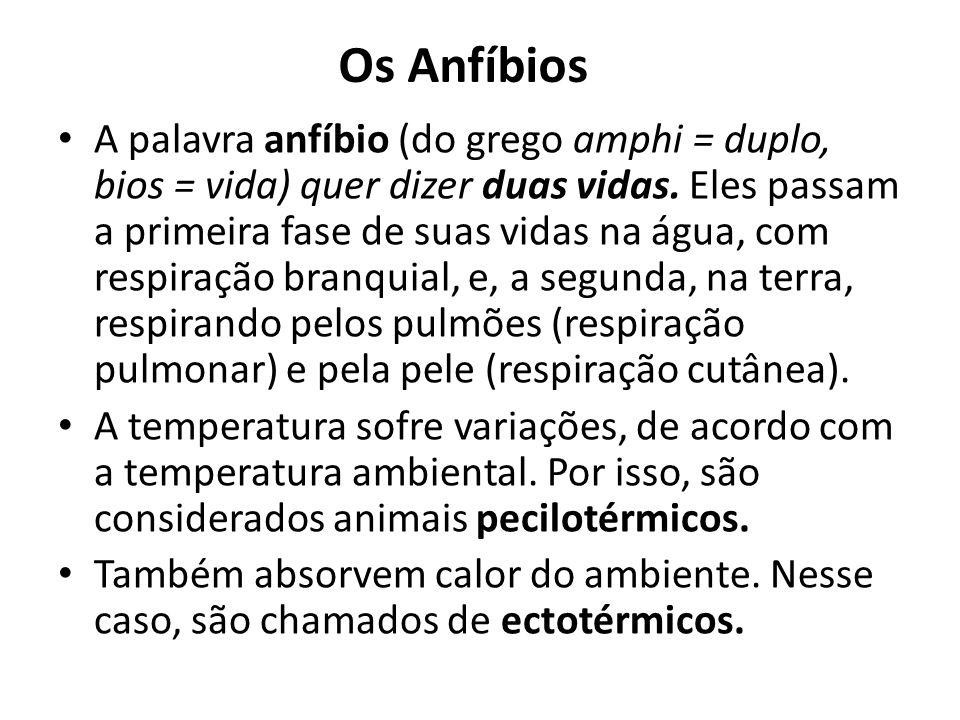 Os Anfíbios A palavra anfíbio (do grego amphi = duplo, bios = vida) quer dizer duas vidas. Eles passam a primeira fase de suas vidas na água, com resp
