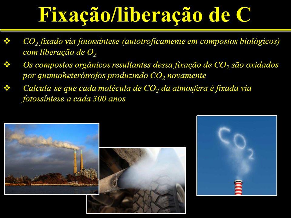 Fixação/liberação de C CO 2 fixado via fotossíntese (autotroficamente em compostos biológicos) com liberação de O 2 Os compostos orgânicos resultantes