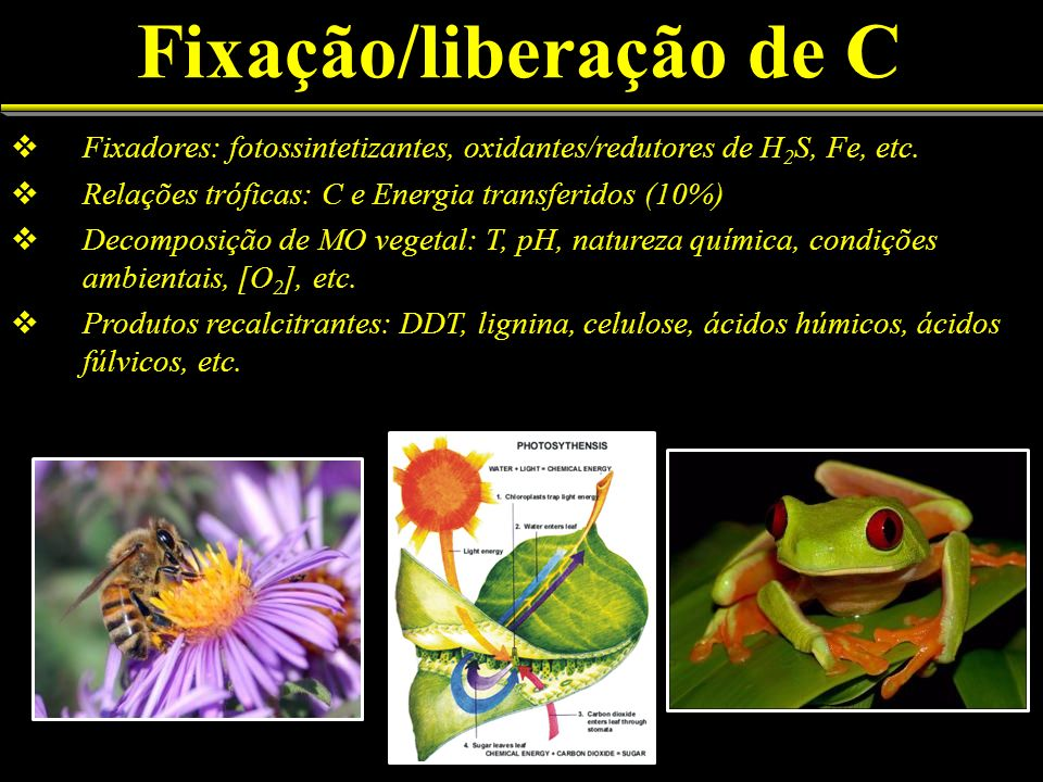 Fixadores: fotossintetizantes, oxidantes/redutores de H 2 S, Fe, etc. Relações tróficas: C e Energia transferidos (10%) Decomposição de MO vegetal: T,