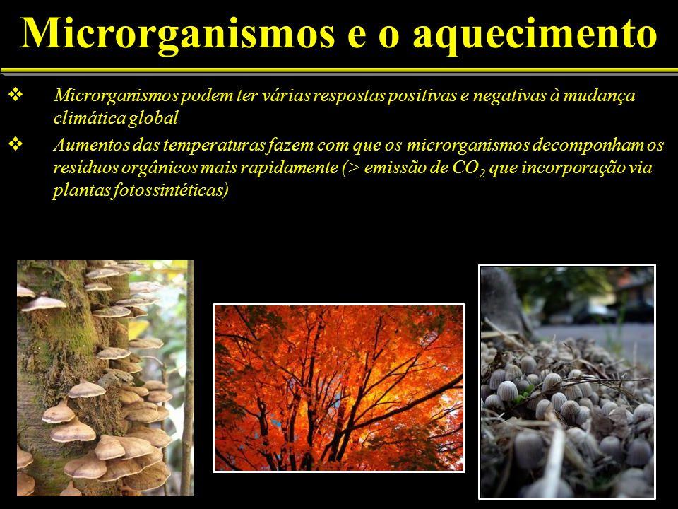 Microrganismos podem ter várias respostas positivas e negativas à mudança climática global Aumentos das temperaturas fazem com que os microrganismos d