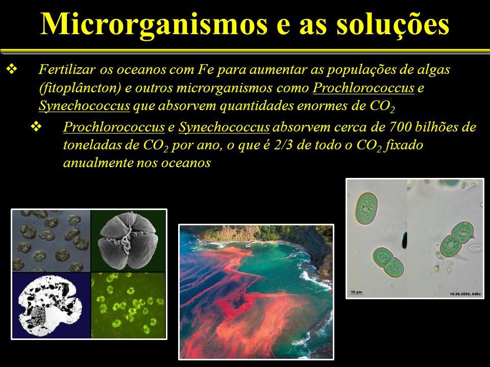 Fertilizar os oceanos com Fe para aumentar as populações de algas (fitoplâncton) e outros microrganismos como Prochlorococcus e Synechococcus que abso