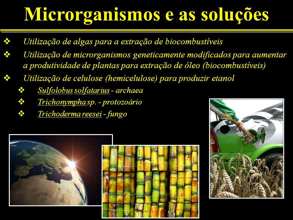 Utilização de algas para a extração de biocombustíveis Utilização de microrganismos geneticamente modificados para aumentar a produtividade de plantas