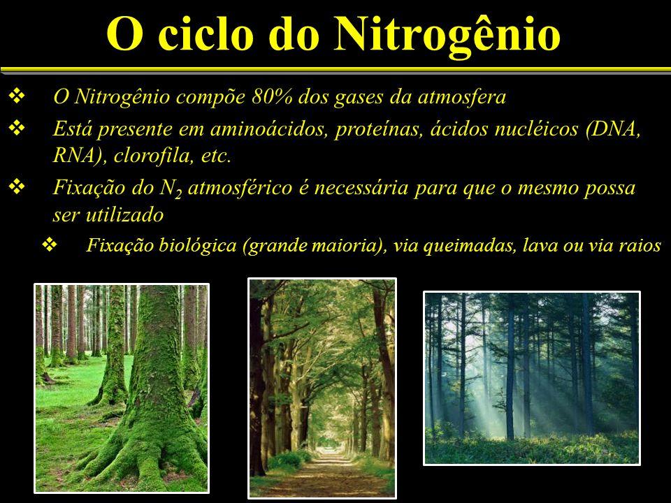 O ciclo do Nitrogênio O Nitrogênio compõe 80% dos gases da atmosfera Está presente em aminoácidos, proteínas, ácidos nucléicos (DNA, RNA), clorofila,