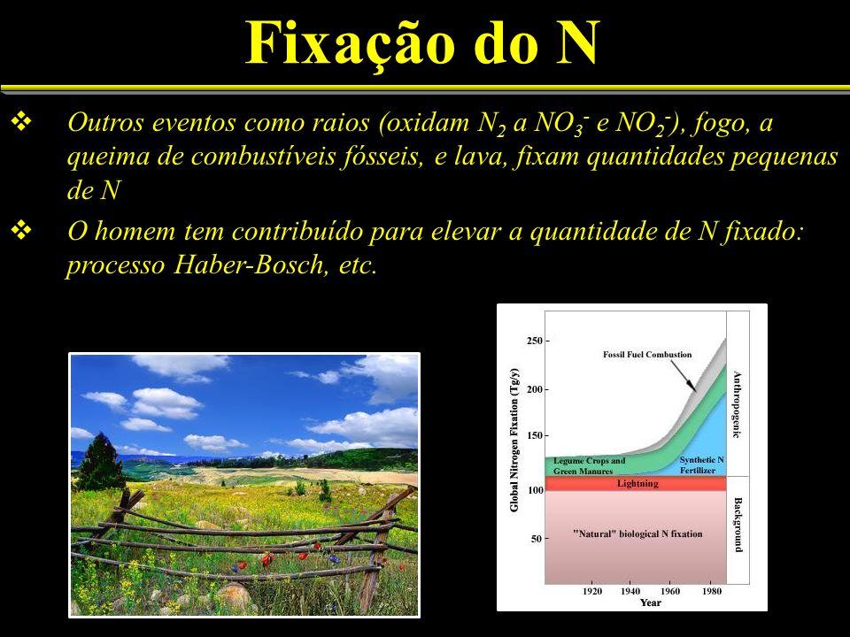 Fixação do N Outros eventos como raios (oxidam N 2 a NO 3 - e NO 2 - ), fogo, a queima de combustíveis fósseis, e lava, fixam quantidades pequenas de