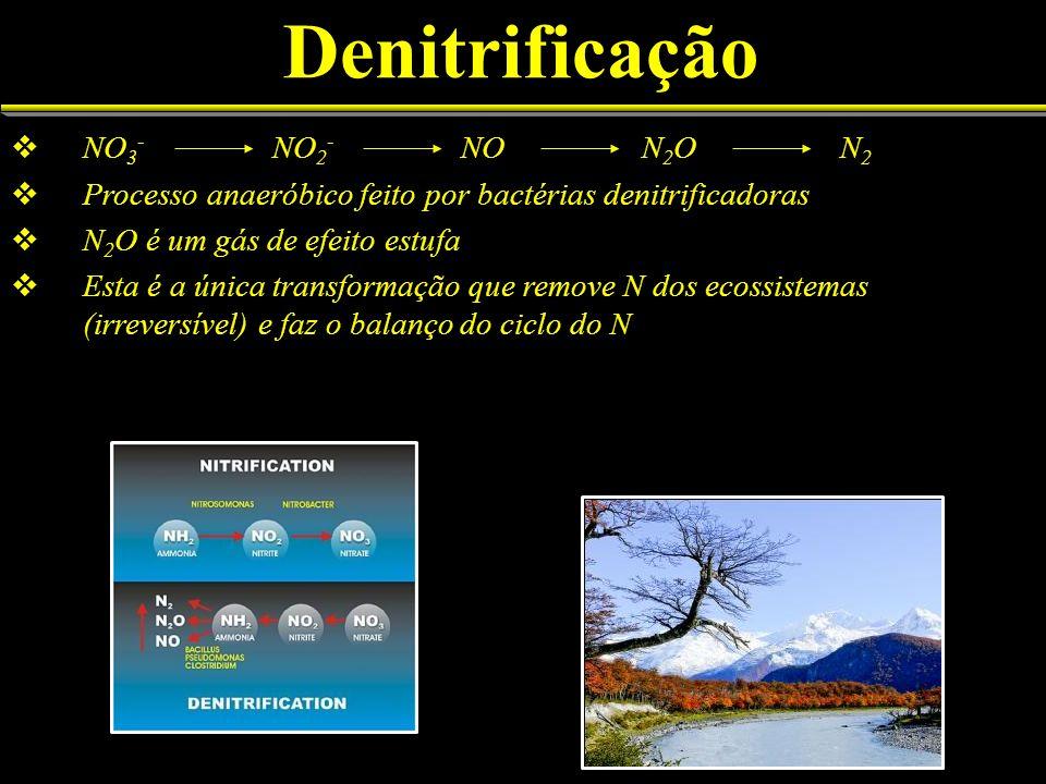 Denitrificação NO 3 - NO 2 - NO N 2 O N 2 Processo anaeróbico feito por bactérias denitrificadoras N 2 O é um gás de efeito estufa Esta é a única tran