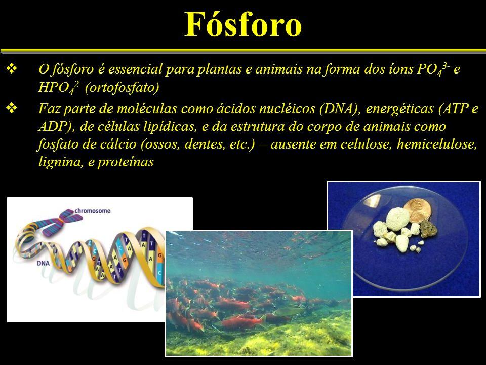 Fósforo O fósforo é essencial para plantas e animais na forma dos íons PO 4 3- e HPO 4 2- (ortofosfato) Faz parte de moléculas como ácidos nucléicos (