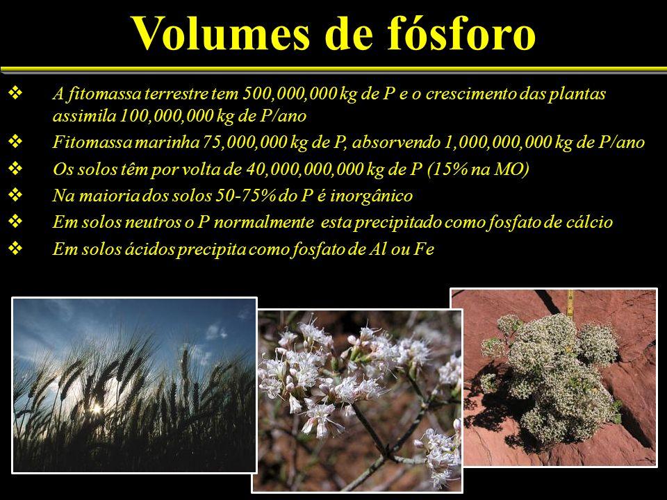 Volumes de fósforo A fitomassa terrestre tem 500,000,000 kg de P e o crescimento das plantas assimila 100,000,000 kg de P/ano Fitomassa marinha 75,000